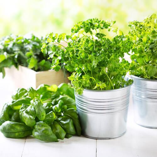 come-congelare-le-erbe-aromatiche