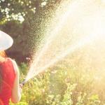 Quante volte dovresti innaffiare le tue piante?