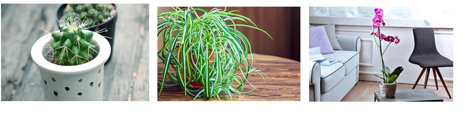piante foto.pptx2